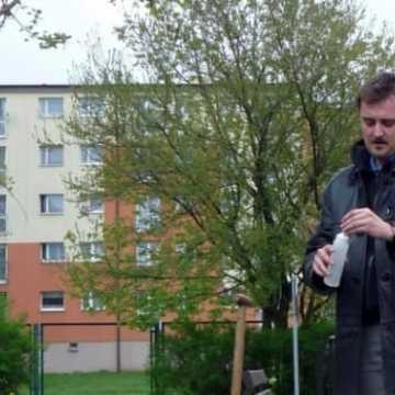 Szczepienie topoli w Radomsku