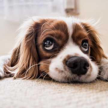 Koronawirus: zwierzęta też potrzebują wsparcia. W Radomsku ruszyła zbiórka karmy