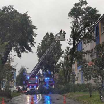 Spadający konar uszkodził samochody na ul. Bugaj w Radomsku