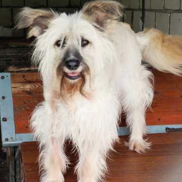 1 lipca obchodzimy Dzień Psa. Adopcja zwierząt w Radomsku za złotówkę!