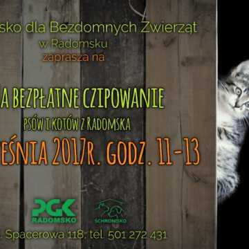 Bezpłatne czipowanie psów i kotów w Radomsku