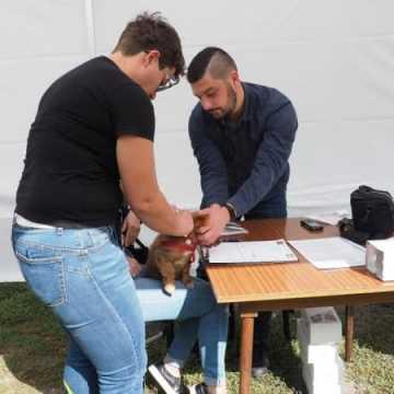 Zaczipowano psy i koty w Radomsku