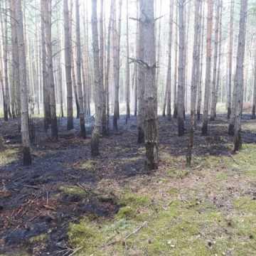 Pożar poszycia leśnego w Żytnie