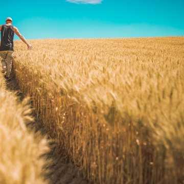 Za kilka dni ruszy Powszechny Spis Rolny