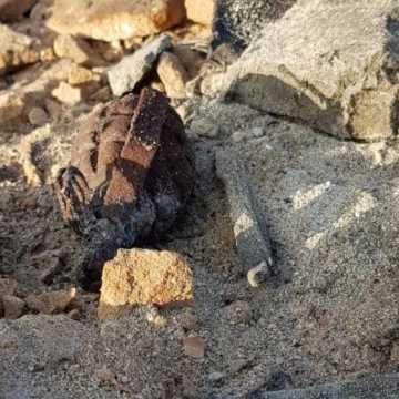 Mieszkaniec Przedborza znalazł dwa granaty