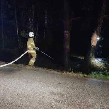 Pożar lasu w Koźniewicach