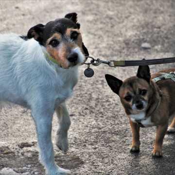 Kosztowny spacer z psem