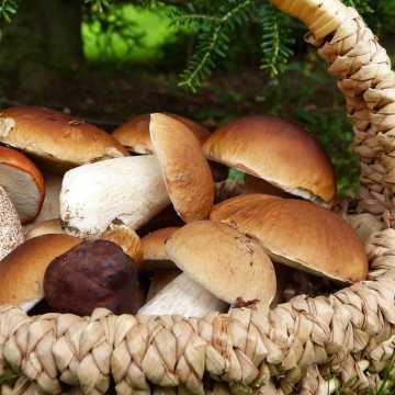 Sanepid radzi: Poznaj grzyby – unikniesz zatrucia