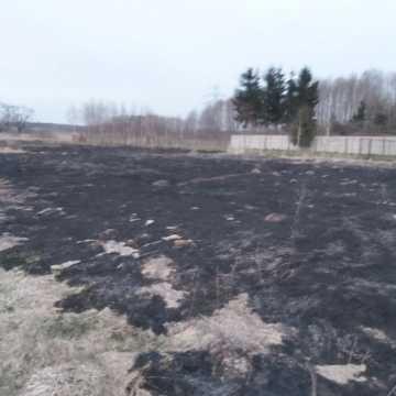30 arów suchej trawy spłonęło w Przedborzu