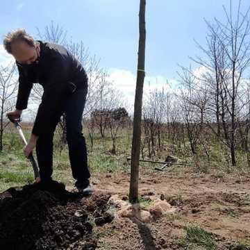 [WIDEO] Prezydent Radomska sadził drzewa przy ul. Unii Europejskiej