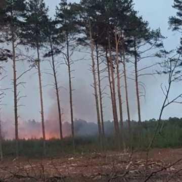 Podpalacz w Suchej Wsi? Znów płonął las