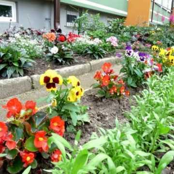 Radomsko w kwiatach i zieleni