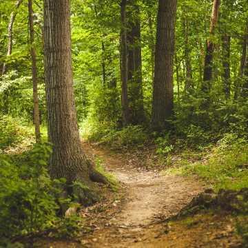 Leśnicy apelują: odwiedzając lasy przestrzegajmy zasad bezpieczeństwa