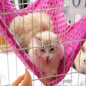 Rasowe koty w MDK