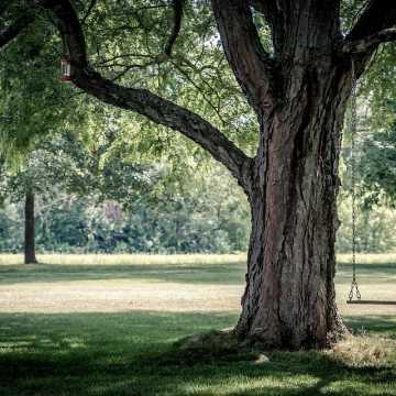 Jak pogodzić inwestycje w mieście z dobrem przyrody? MRM organizuje debatę