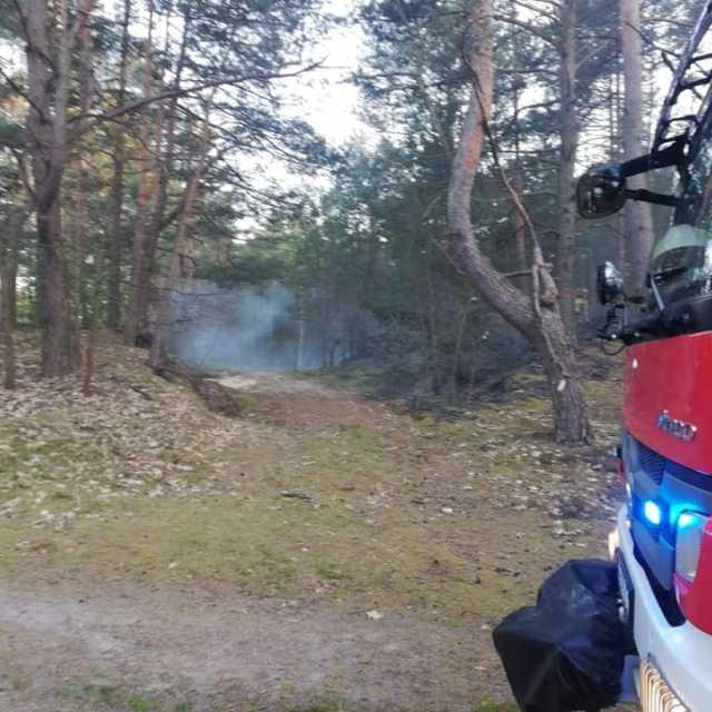 Spaliło się 5 arów poszycia leśniego w okolicach Żytna
