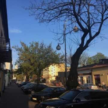 Petycja do władz: Stop wycince drzew