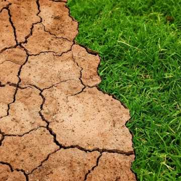 Trwa nabór wniosków o udzielenie pomocy COVID-19 rolnikom poszkodowanych ubiegłoroczną suszą