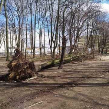 Wiatr powalił drzewa w parku Świętojańskim