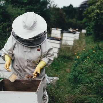 Wsparcie dla pszczelarzy