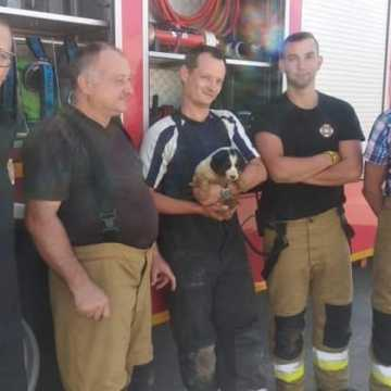 Strażacy z Kamieńska uratowali uwięzionego pieska