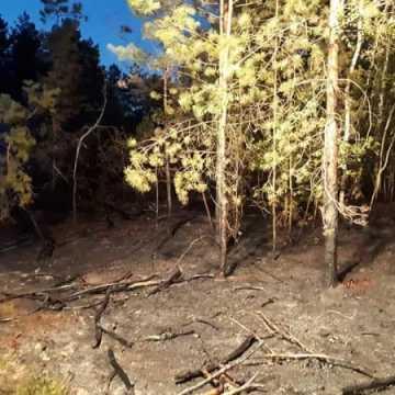 Pożar poszycia leśnego w Załawiu