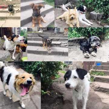 Będą promować adopcję zwierzaków