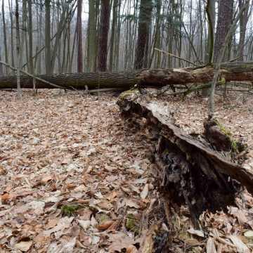 """Leśne krajobrazy na plenerze fundacji """"Foto POZYTYW"""""""
