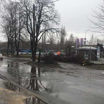 Rozpoczęła się wycinka drzew przy ulicy św. Rozalii