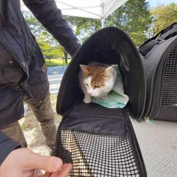 W Radomsku zaczipowano bezpłatnie 30 zwierząt