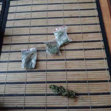 Hodował marihuanę na parapecie
