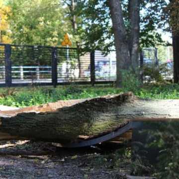 Powalone konary na drogi i tory, zerwane linie – bilans szkód po wichurze