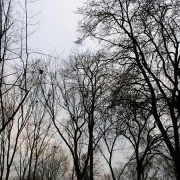 Ptasie odchody w parku Świętojańskim