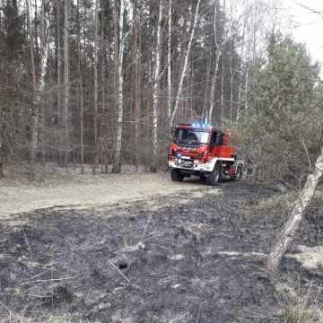 Pożar lasu na ul. Strzałkowskiej w Radomsku. W akcji trzy zastępy strażaków