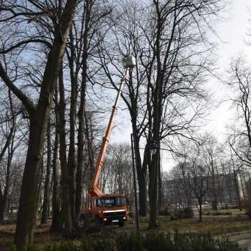 W Radomsku trwa akcja zrzucania ptasich gniazd