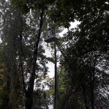 Brzoza w Parku Świętojańskim nie będzie już stwarzać zagrożenia