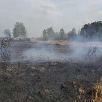 Pożar w gminie Przedbórz. Spłonęła trawa i węże
