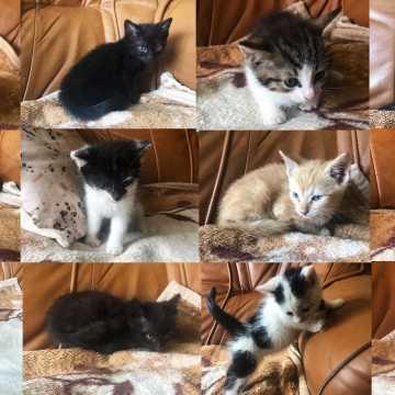 Małe kotki do adopcji za symboliczną złotówkę
