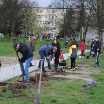 Samorządowcy z Platformy Dialogu sadzili drzewa