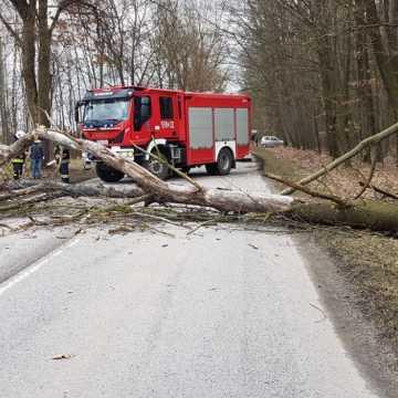 Wiatr powalił drzewo. Interweniowali strażacy